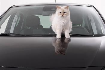 Шокирующая роскошь, или Как живет любимая кошка Карла Лагерфельда