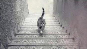 Тест-иллюзия: Куда идет кот – вверх или вниз? расскажет, кто вы по жизни