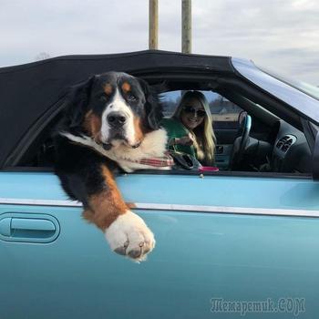 Собаки, которые слишком устали быть хорошими мальчиками