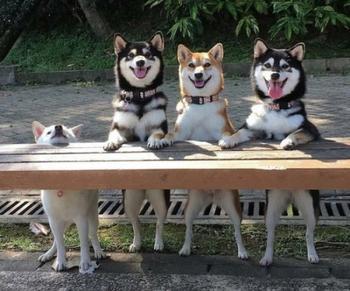 Забавные животные, которые вызовут у вас улыбку