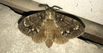 В Томске нашествие гигантских бабочек — романтично и отвратительно