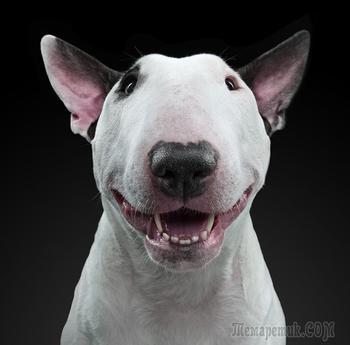 20 выразительных портретов собак, через которые видно их душу и характер