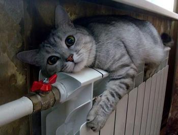 Кошачьей мерзлявости пост