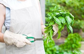 8 советов по хранению продуктов, которые помогут сократить количество отходов