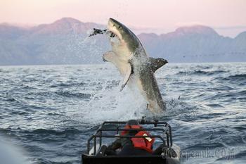 Легендарные акулы-людоеды