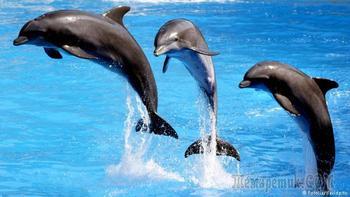 Индия. Дельфины и китообразные признаны личностями. Введён запрет на дельфинарии