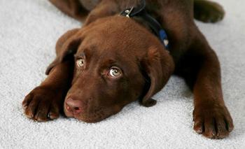10 советов, которые должен знать каждый владелец собаки