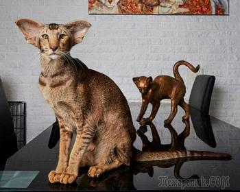 Портреты питомцев от официального фотографа животных Амстердама