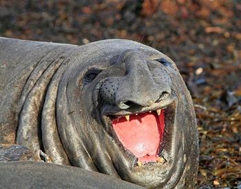 25 улыбающихся животных, глядя на которых вы сами расплывётесь в улыбке