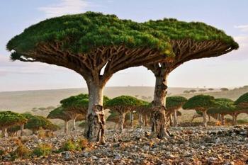 Сокотра: Место, где обитают эльфы, или чудом уцелевший остров из прошлого