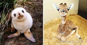 Несколько детенышей животных, которые растопят даже самое холодное сердце