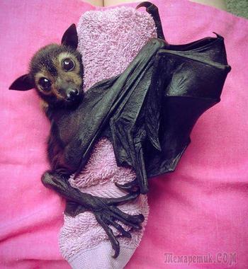 Эта фотоподборка изменит ваше мнение о летучих мышах!