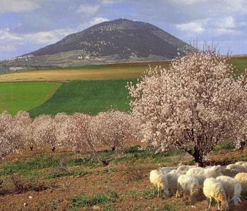 Феномен благодатного облака на горе Фавор подтвержден учеными