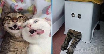 Несколько котов, глядя на которых невозможно оставаться серьезным