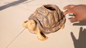 Очаровательная черепашка своими руками
