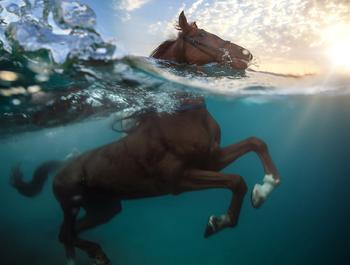 Необычные водоплавающие
