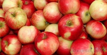 Подкормка яблонь весной, летом и осенью