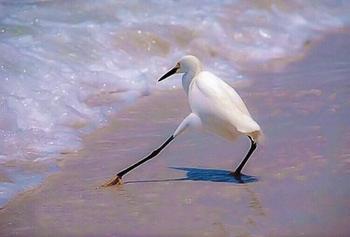 Фото нелепых и немного забавных птиц