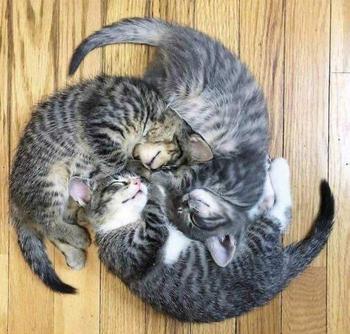 18 раз, когда люди застали своих котиков так мило спящими вместе