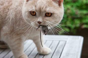 10 научных фактов, подтверждающих, что без кота жизнь не та