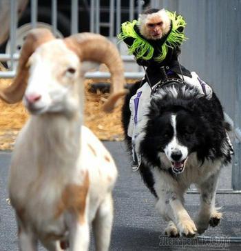 Собаки, действия которых невозможно объяснить