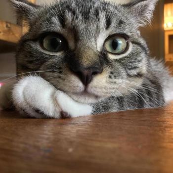 Уморительные кошки, которые сразу превратят всех собачников в кошатников