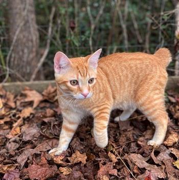 Вместе навсегда: 10 пород кошек-долгожителей