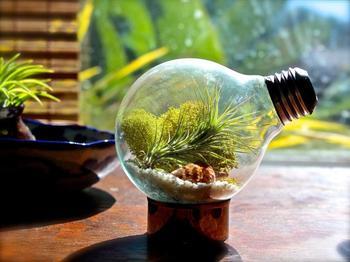 Идеи, как создать небольшой декоративный террариум своими руками