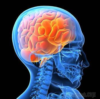 Интересные факты о нервной системе человека: как сохранить здоровье?