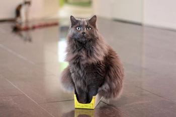 Кошки, которые никогда не перестанут удивлять