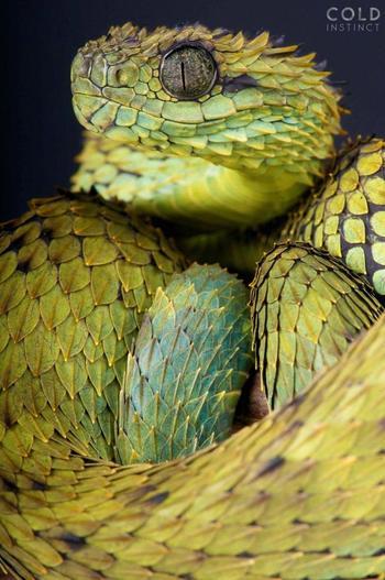 Красивые и чертовски опасные: 25 рептилий, которых вам едва ли захочется погладить