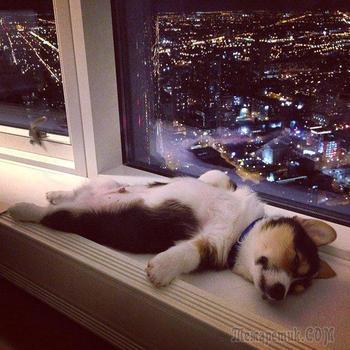 Животные тоже очень устают за день