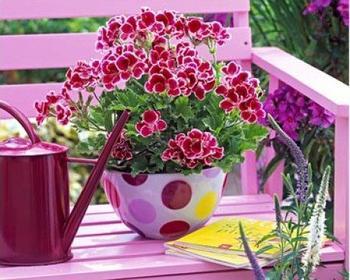 Интересные цветники и вазоны