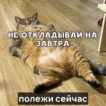Кошачьи пословицы и поговорки