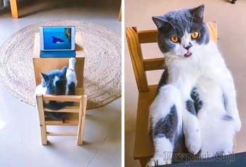 Иногда коты ведут себя неадекватно, но им все равно