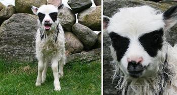 20 брутальных животных, которые выглядят как металлисты и готы