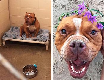 Люди приютили бездомных собак, и их фото до и после доказывают, что дарить счастье очень легко