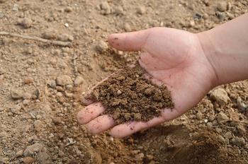 Как подготовить картофель и почву к посадке?