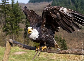 Парк хищных птиц в Германии