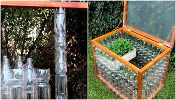 Мини-парник для рассады из пластиковых бутылок: дешево, быстро и надежно