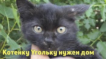 Маленький котенок Уголек в добрые руки
