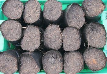 Быстрый компост в мешках: осенью закладываем, а весной вносим на грядки