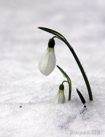 С праздником весны, дорогие и уважаемые женщины! Первоцветы Крыма