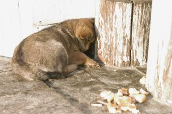 Чудом спасенный и покоривший сеть щенок обрел хозяев