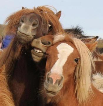 Яркая фотоподбока животных, которые могли бы работать топ-моделями
