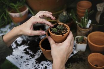 Что делать, если у вас не приживаются комнатные растения
