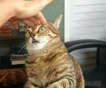 Когда кошки так похожи на людей!