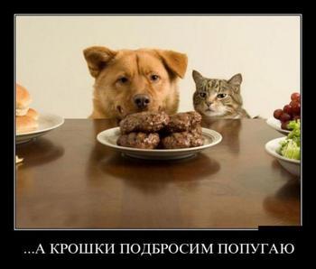 Смешные демотиваторы про животных