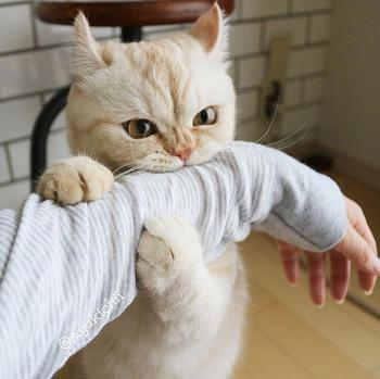 20 бесконечно забавных котиков, которые сделают лучше даже самый тяжёлый день