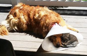 20 фотодоказательств очаровательной дружбы котов и собак